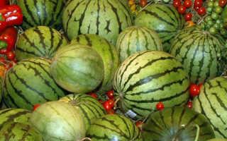 Как выбрать сорт и вырастить арбуз на Урале