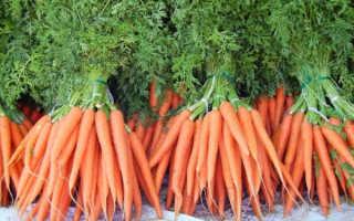 Почему плохо растет морковь и что делать?