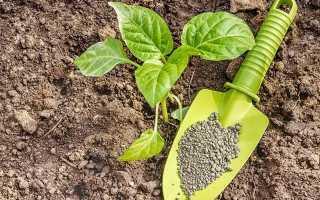 Чем кормить перец для активного роста и урожайности