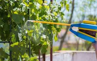Опрыскивание винограда железным купоросом осенью