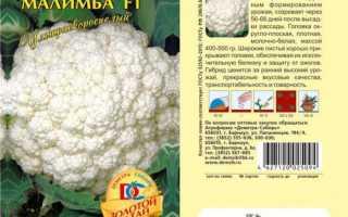 Капуста цветная Малимба — описание сорта, фото, отзывы, посадка и уход