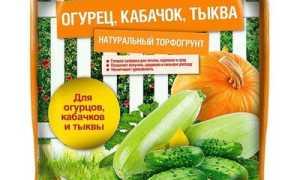 Схема посадки тыквы