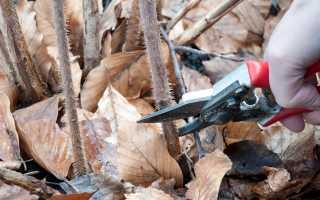 Посадка, уход и обрезка малины осенью