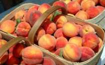 Сорт Японский персик