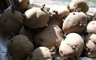 Картофель Инара — описание сорта, фото, отзывы, посадка и уход