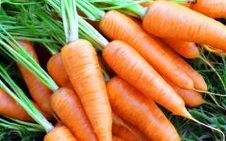 Когда выкапывать морковь на хранение в Подмосковье?