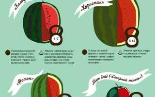 Основные сорта и особенности гибридов желтых арбузов