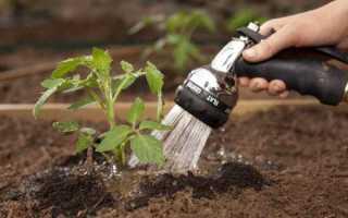 Правильный полив овощных растений