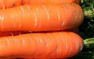 Полив моркови — как и когда поливать правильно?