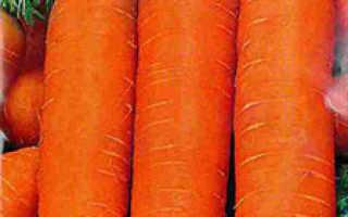 Сорта моркови, устойчивые к морковной мухе