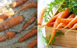 Как хранить морковь в пищевой пленке?