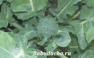 Цветет капуста брокколи — что делать?