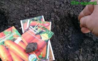 Какие удобрения вносить осенью под морковь?