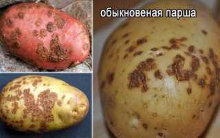Как бороться с паршой на картофеле?