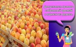 Как хранить абрикосы, чтобы они дозрели?