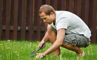 Как избавиться от сорняков на участке? Как навсегда удалить сорняки с заросшего участка? Как избавиться от заросших сорняков на садовом участке народными методами?