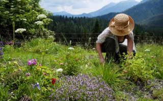 Аптечный сад или лекарственный цветник: схемы