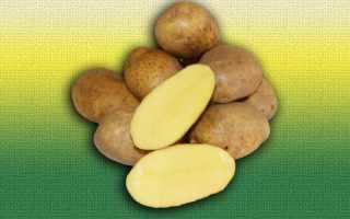 Картофель Бельмондо — описание сорта, фото, отзывы, посадка и уход