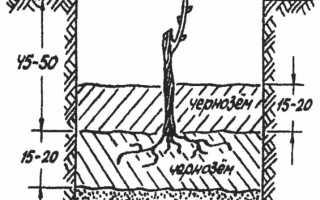 Нитрафен — способ применения для винограда