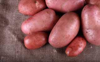 Картофель «Дезире»: характеристика и описание сорта, достоинства и недостатки