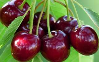 Какой сорт черешни лучше посадить в саду?