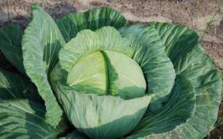 Нужно ли убирать у капусты листья?