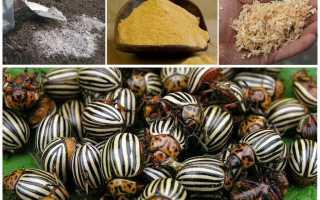 Чем обработать баклажаны от колорадского жука без химии?