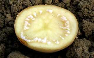 Болезни картофеля и их лечение с фото