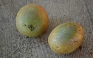 Зеленеет картофель — что делать?