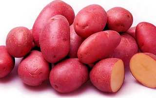 Картофель Ред Скарлет — описание сорта, фото, отзывы, посадка и уход