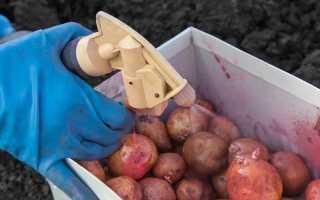 Обработка картофеля от болезней и вредителей