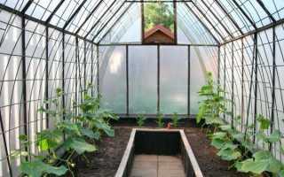 Как ухаживать за огурцами в теплице, чтобы был хороший урожай?