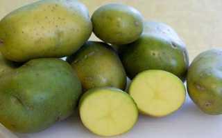 От чего зеленеет картофель?