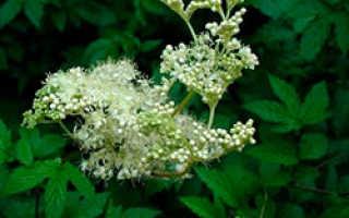 Выращивание и уход в полевых условиях, посадка и размножение, сорта и сочетания в ландшафтном дизайне, фото