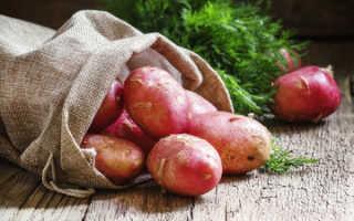 Картофель Ермак — описание сорта, фото, отзывы, посадка и уход