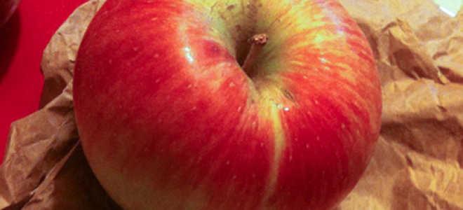 Яблоня Уэлси — описание сорта, фото, отзывы
