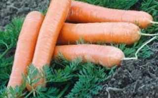 Сорта моркови без сердцевины с описанием и фото