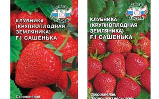 Земляника Сашенька F1: выращивание, описание сорта, фото и отзывы