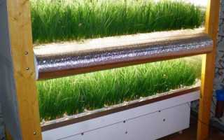 Выращивание лука на перо в теплице