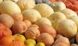 Лучшие кормовые сорта тыквы с описанием