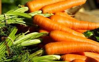 Как правильно сеять морковь?