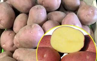 Картофель Белла Росса — описание сорта, фото, отзывы, посадка и уход