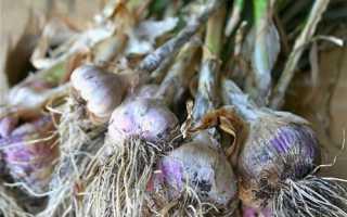 Гербициды для чеснока — названия и применение