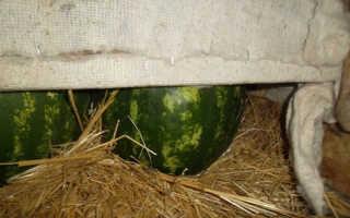 Правила и методы успешного хранения арбузов на зиму