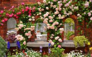 Размножение плетистой розы черенками или черенками весной, летом и осенью