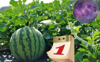 Чем и как правильно подкормить арбузы