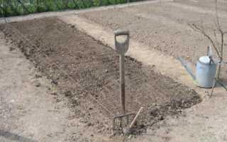 Подготовка почвы для посадки озимого лука