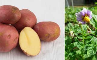 Картофельный манифест: описание и сравнение в таблицах, отзывах