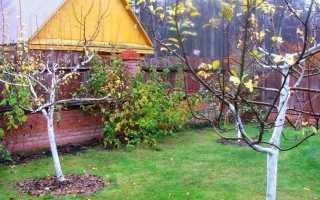 Как на зиму укрыть персик?