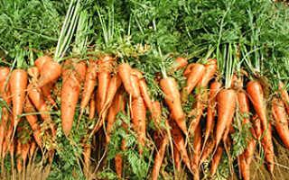 С чем можно сажать морковь на одной грядке?